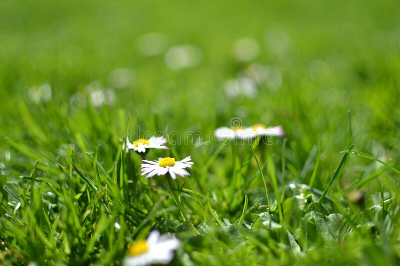White and Yellow Flowers Under Sunny Sky during Daytime stock photography