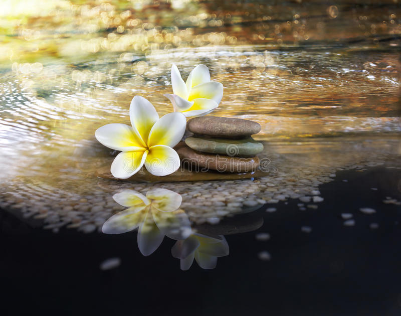 White and yellow fragrant flower plumeria or frangipani on crystalline water and pebble rock for spa meditation mood, plumeria or royalty free stock photography