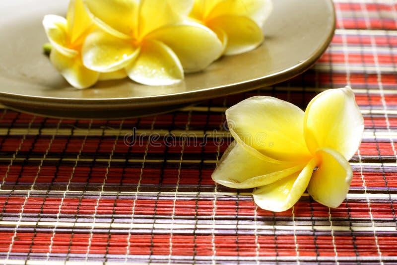 White Yellow Frangipani royalty free stock photography