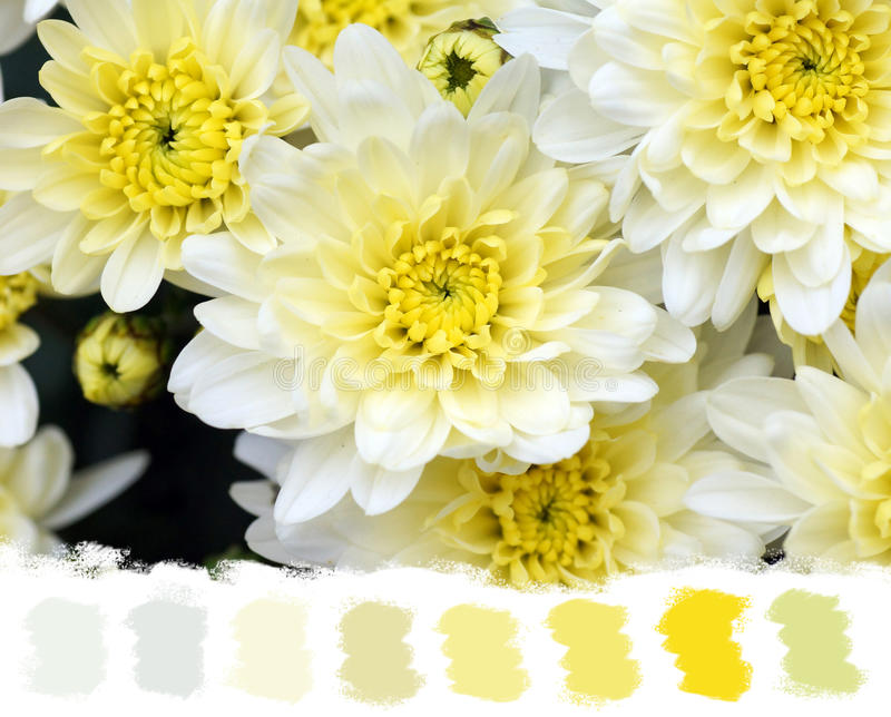 White and yellow mums color palette