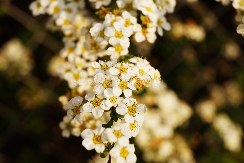 White and Yellow Petaled Flower royalty free stock photography