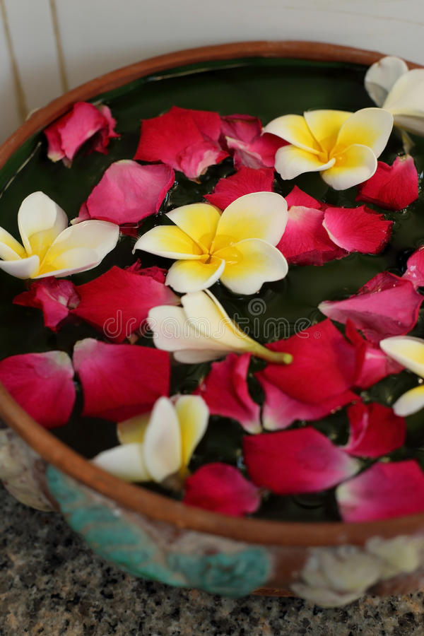 White and yellow Plumeria flower and pink rose petal float in water. White and yellow Plumeria flower and pink rose petal float in clay bowl with water royalty free stock image