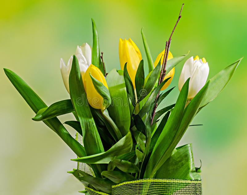 White and yellow tulips flowers, bouquet, floral arrangement, close up, green bokeh background royalty free stock photos