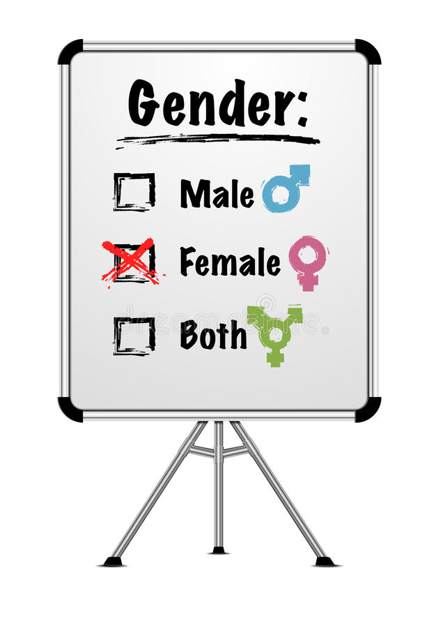 Whiteboard gender. Detailed illustration of a whiteboard with gender choice vector illustration