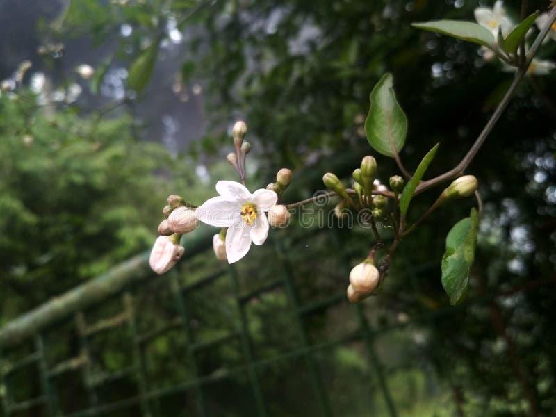 Whiteflower,  Nature beauty, mobiclickz, photography. Fallen, leaves, story, golden, mobiclicks stock photos