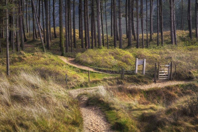 Whiteford skog på den Gower halvön i Swansea arkivbild
