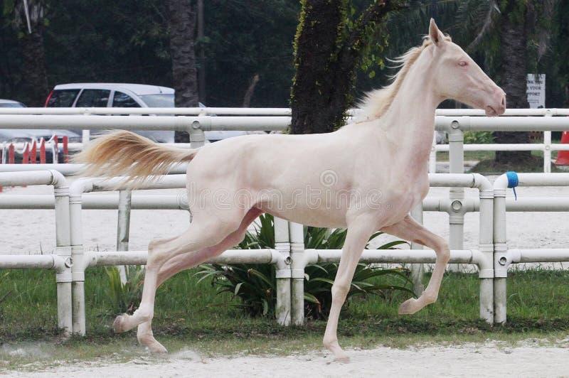 Whitehorse 4 zdjęcie stock
