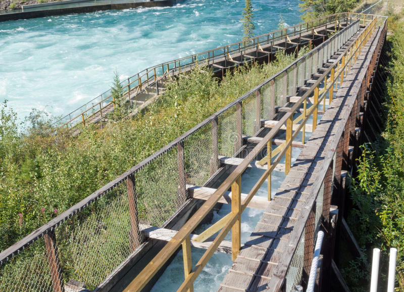 Whitehorse Salmon Fishladder Yukon River Canada. Whitehorse Fish Ladder, world's longest wooden Fishway, lets Salmon get past dam to their spawning grounds stock images