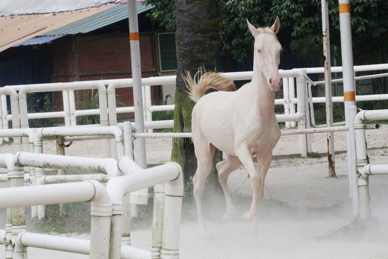 Whitehorse3 zdjęcia royalty free