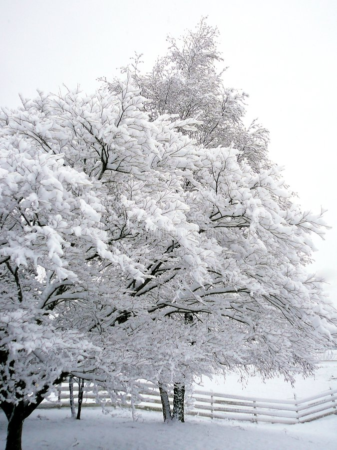 Download Whiteout Stock Image - Image: 2007211