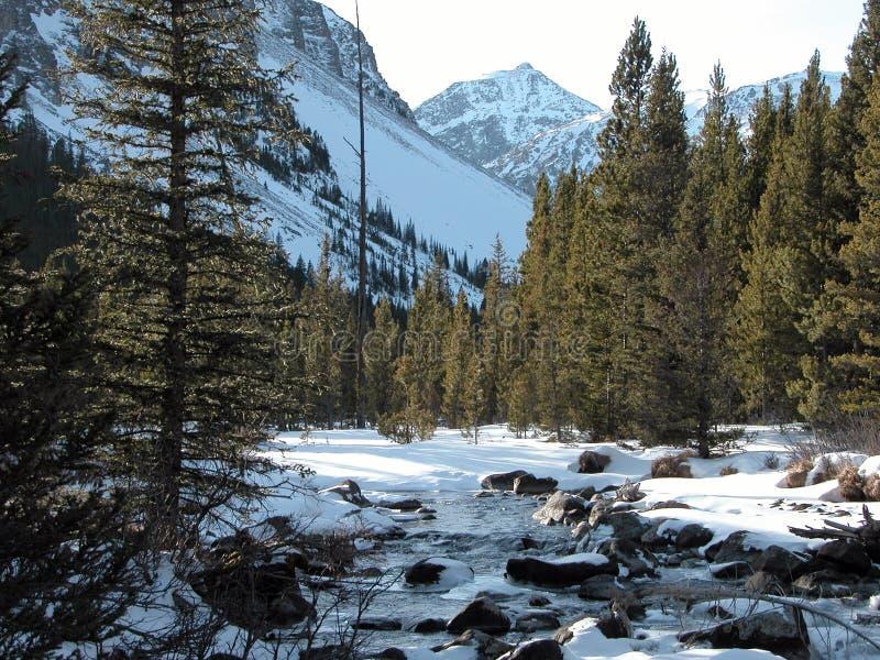 Download Whitetail montana szczytu obraz stock. Obraz złożonej z nicielnica - 135403