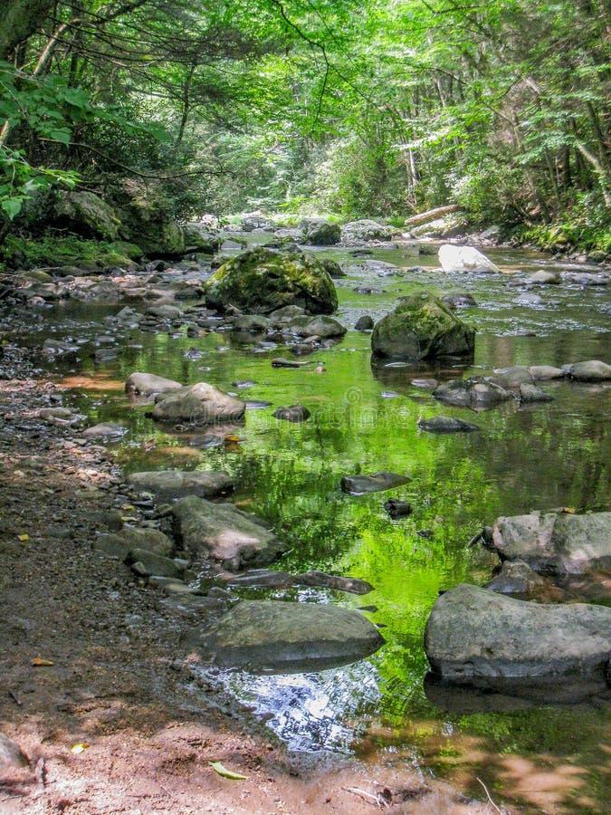 Whitetop Laurel Creek längs Virginia Creeper Trail arkivfoto