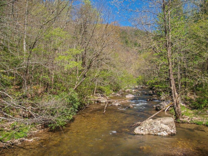 Whitetop Laurel Creek längs Virginia Creeper Trail royaltyfria bilder