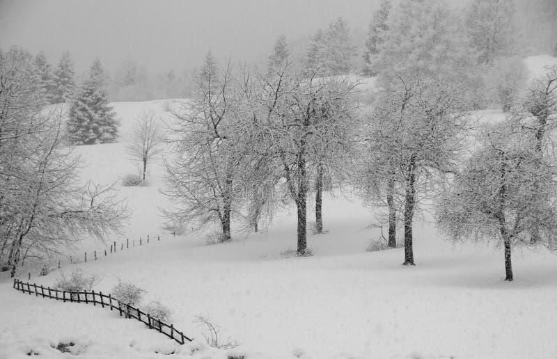 Whitewashed Trees During Copious Snowfall Stock Photos