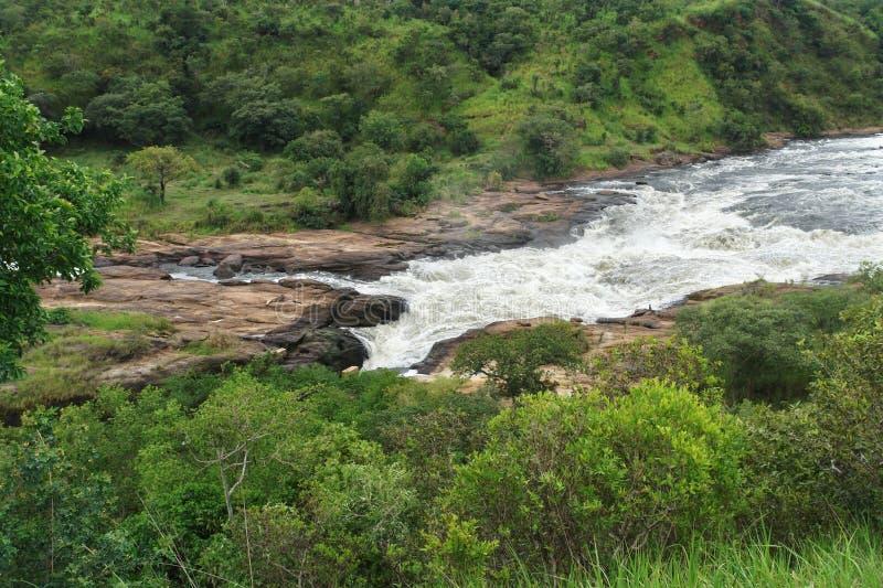 Whitewater bei Murchison Falls in Afrika stockbild