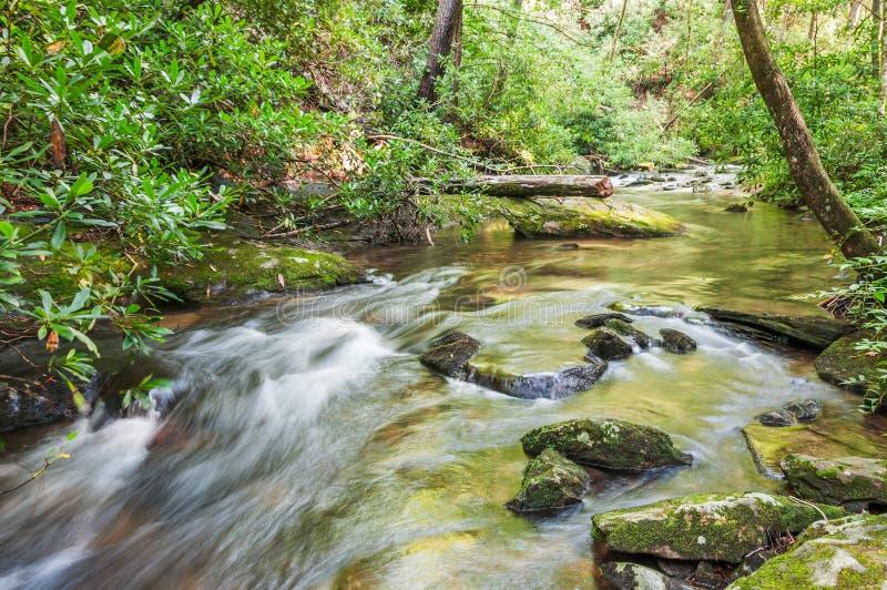 Whitewater forellström, Chattahoochee nationalskog arkivfoton