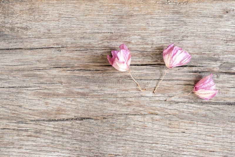 Whithered-Orchideenblumen auf rustikalem Eichenholz lizenzfreie stockfotografie