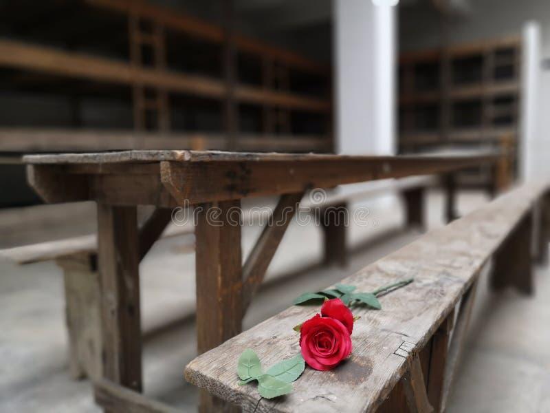 Whitout ord Terexzin koncentrationsläger royaltyfri foto