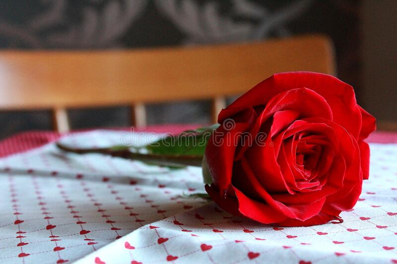 1,081 Roses Red Violets Blue Photos - Free & Royalty-Free Stock Photos from Dreamstime