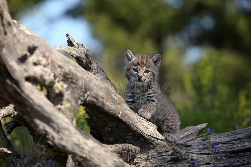 Download Who Me? stock photo. Image of mammal, kitten, playful - 11975922
