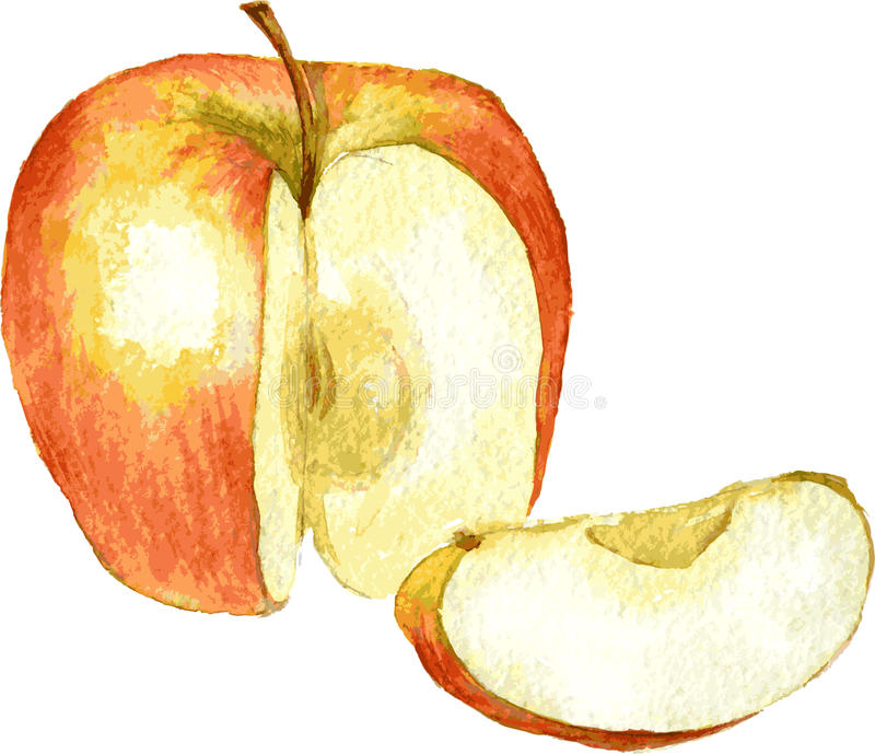 Whole apple and slice drawing by watercolor vector illustration