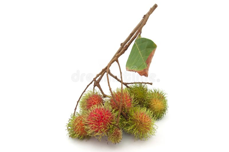 Whole bunch of Rambutan fruits has a delicious sweet taste. stock images