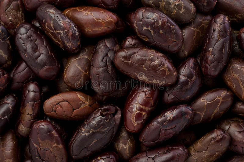Whole Cacoa Nibs (Theobroma cacao) royalty free stock images