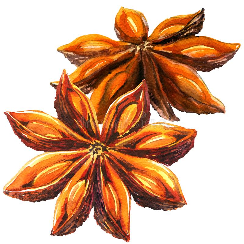 Whole chinese star anise spice and seeds, two objects isolated, watercolor illustration on white royalty free illustration
