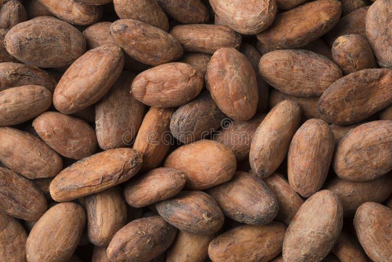 Whole cocoa beans full frame close up. Whole organic cocoa beans full frame close up royalty free stock image