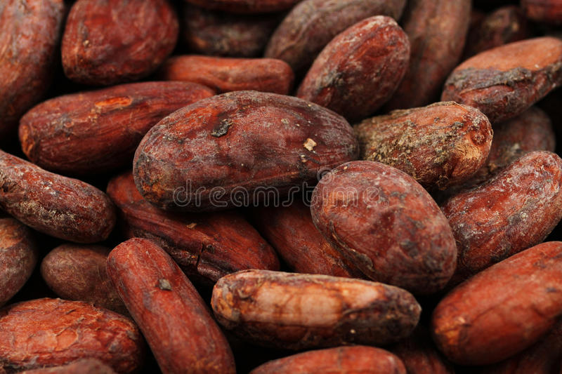 Whole cocoa beans in macro royalty free stock photo