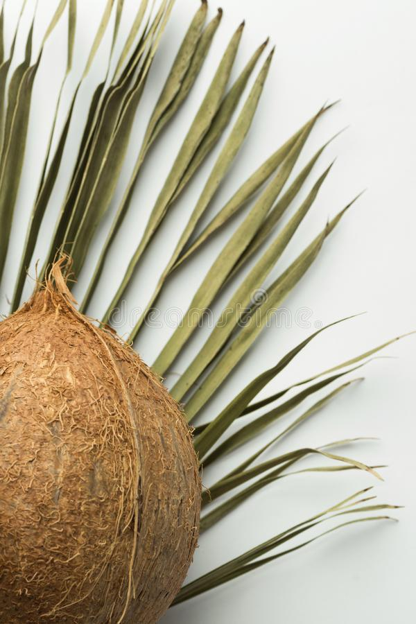 Whole coconut dry palm leaf on white background. Tropical fruits vegan healthy diet concept ingredient for non dairy milk. Eco friendly reusable materials for stock image
