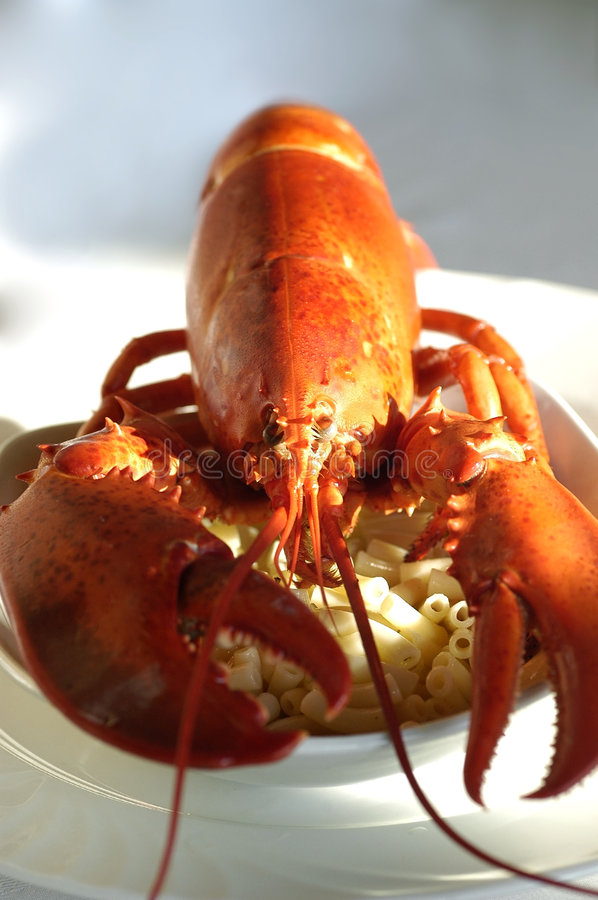 Download Whole cooked lobster stock photo. Image of seafood, market - 7902748