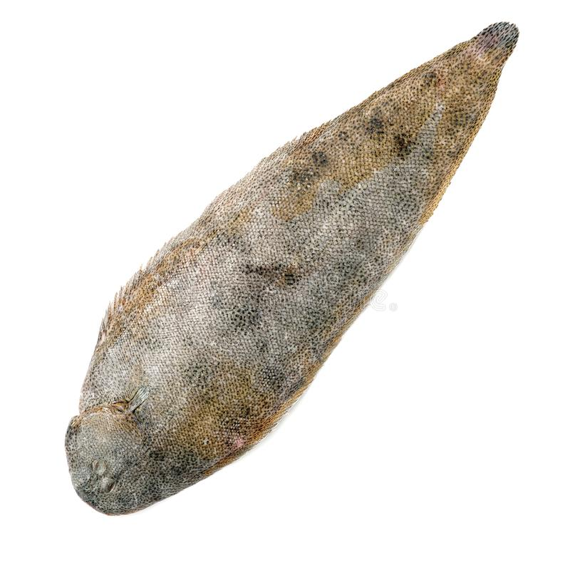 Whole couple fresh sole fish stock images
