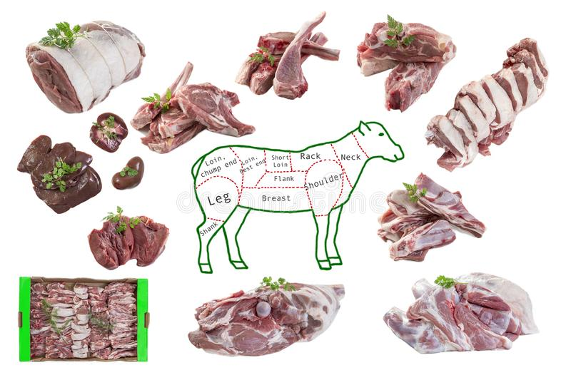 Whole drawing mutton in piece and raw pieces of lamb meat on white background. Whole drawing mutton in piece and raw pieces of lamb meat on white royalty free stock image