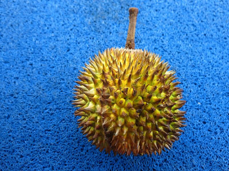 The whole durian. Hard and sharp spines. stock photo