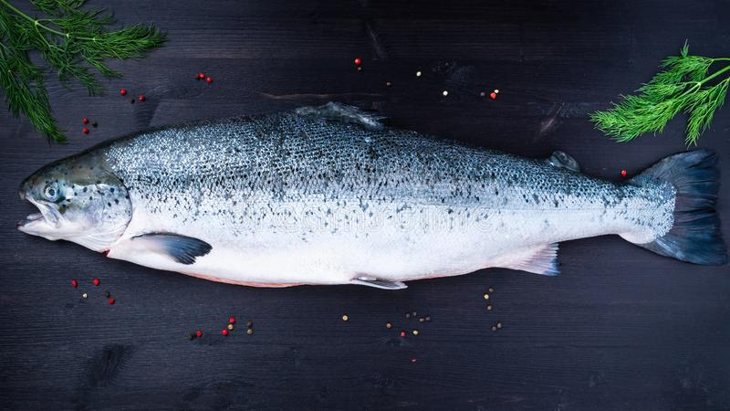 Whole fresh raw big salmon fish on dark black wooden table, top view royalty free stock image