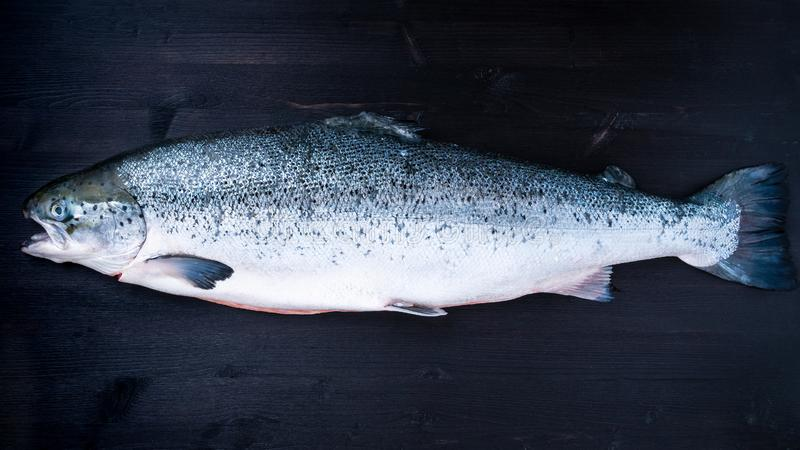 whole fresh raw big salmon fish on dark black wooden table, top stock images