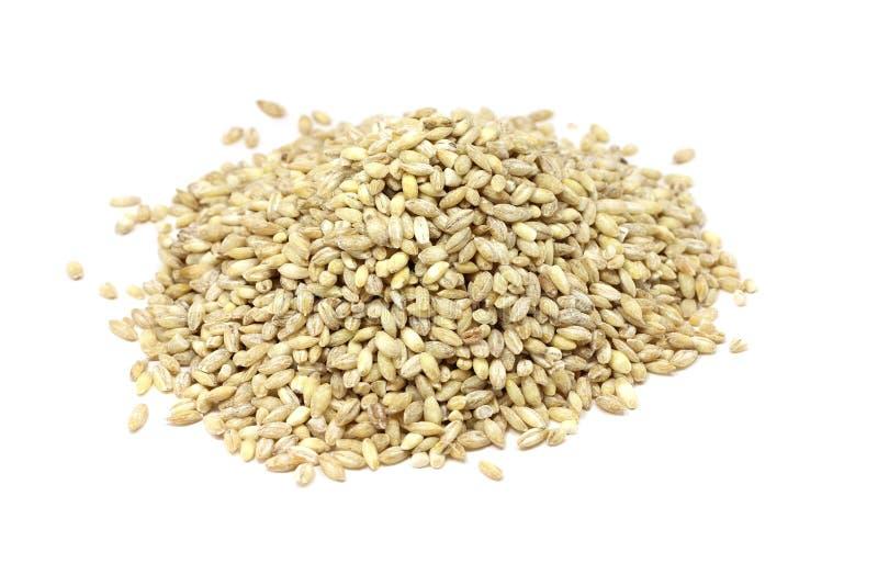 Whole grain pearl barley royalty free stock images