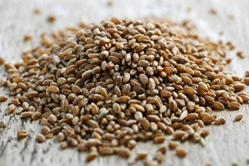 Whole Grain Wheat Kernels Closeup Royalty Free Stock Photos