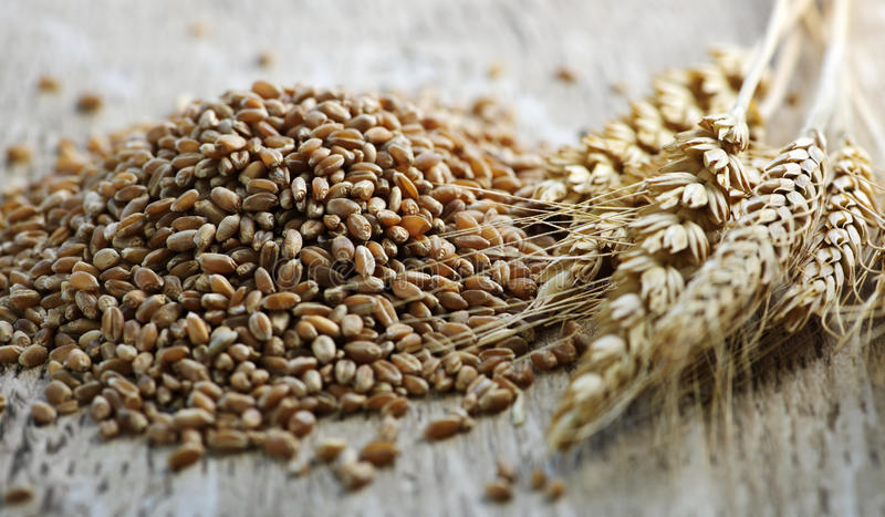 Whole grain wheat kernels closeup royalty free stock photo