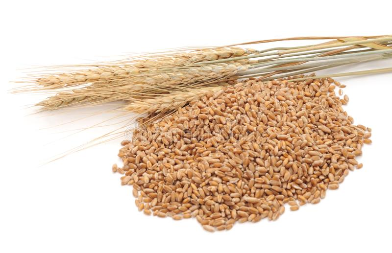 Whole grain of wheat. stock photography