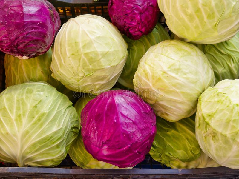 Whole Green and Red Cabbages For Sale at Fresh Fruit and Vegetable Market. Fresh round whole red and white/green cabbages for sale at a fresh fruit and vegetable stock photo