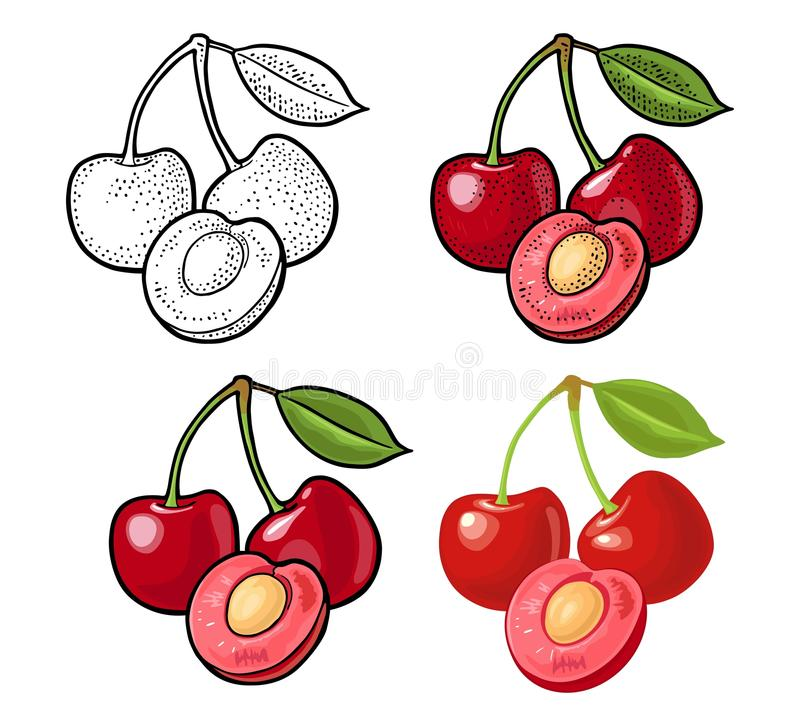Whole and half cherry berry with leaf. Vector engraving and flat royalty free illustration