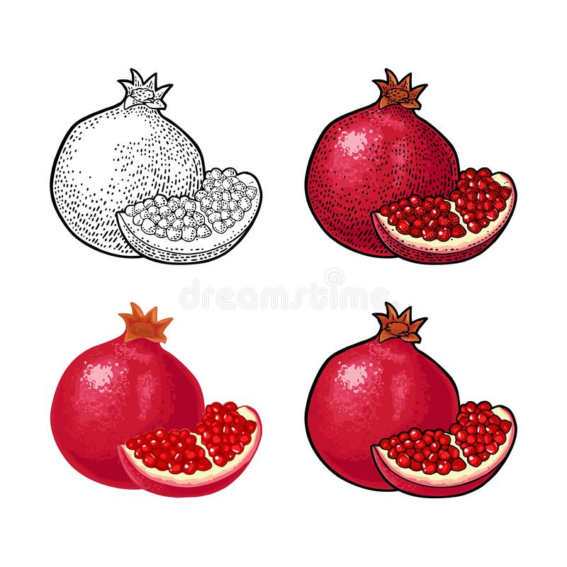 Whole and half garnet fruit with seed. Vector engraving stock illustration