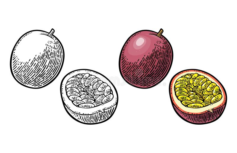 Whole and half maracuya with seed. Vector engraving. Whole and half passion fruit with seed. Vector color and black vintage engraving illustration for menu royalty free illustration
