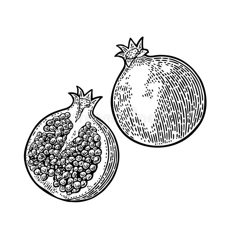 Whole and half passion fruit with seed. Vector engraving vector illustration