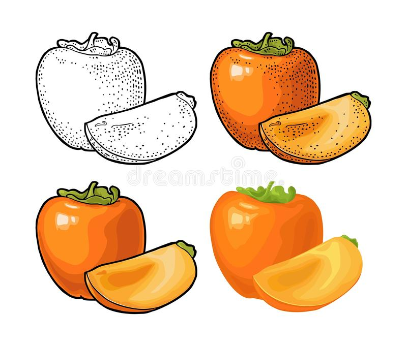 Whole and half persimmon. Vector engraving and flat color illustration stock illustration