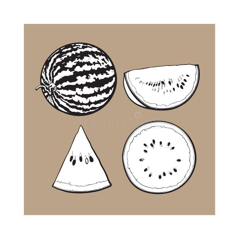 Whole, half, quarter and slice of ripe watermelon, sketch illustration royalty free illustration