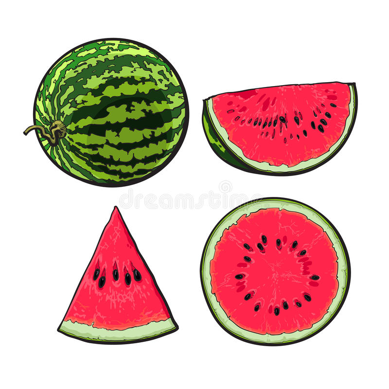 Whole, half, quarter and slice of ripe watermelon, sketch illustration royalty free illustration