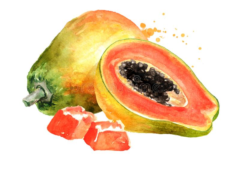 Whole, half and sliced sweet ripe papaya fruit. Watercolor hand drawn illustration, isolated on white background stock illustration